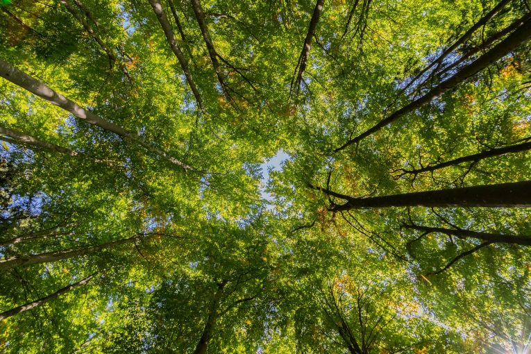 The canopy and God's protection over us